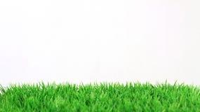 Streifen des frischen grünen Grases auf weißem Hintergrund Lizenzfreies Stockfoto