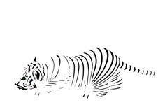 Streifen des Tigers Stockfotos