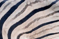 Streifen eines Zebras lizenzfreie stockfotografie
