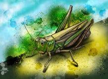 Streifen-geflügelte Heuschrecke Stenobothrus Lineatus - von Hand gezeichnete Illustration Stockfotografie