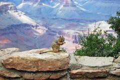 Streifenhörnchen Stockbilder