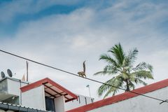 Streifenhörnchen auf dem Draht Stockbild