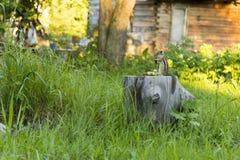 Streifenhörnchen auf einem Stumpf Lizenzfreies Stockbild
