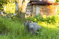 Streifenhörnchen auf einem Stumpf Stockbild