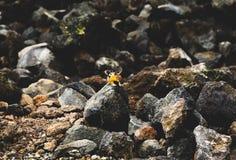Streifenhörnchen auf Felsen Stockfotos