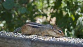 Streifenhörnchen auf Schiene Lizenzfreie Stockfotos