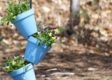 Streifenhörnchen im bunten Blumentopf Stockbilder