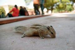 Streifenhörnchen im Park lizenzfreies stockbild