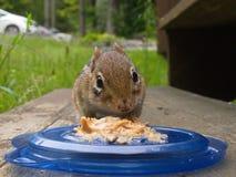 StreifenhörnchenErdnussbutter photobomb lizenzfreie stockfotografie