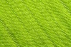 strelitzia листьев Стоковые Изображения RF