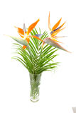 Strelitzia also known as bird of paradise flower Royalty Free Stock Images