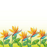 Strelitzia flowers abstract background beauty Stock Photos