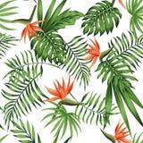 Strelitzia orange white background pattern Royalty Free Stock Photography