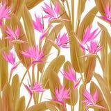 Strelitzia Reginae lub dźwigowy kwiat bezszwowy ilustracja wektor