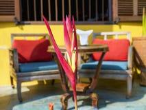 Strelitzia-vogel van paradijs Royalty-vrije Stock Afbeelding