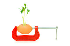 Strength concept with egg and clamp Stock Photography