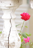 Strength of Life. Cracked balustrade and Red Rose represent history and new life Stock Photography