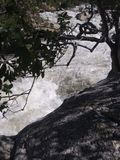 The strength of the tree in the fury of the river stock photo