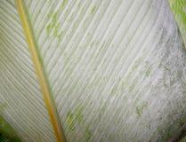 Strepen van heldergroene bladeren Stock Foto