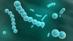 Streptococcus Stock Photos