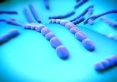 Streptococcus pneumoniae, bacteria artwork Stock Photography