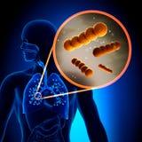 Streptococcus -  Spherical Gram-positive bacteria. Anatomy view Stock Image