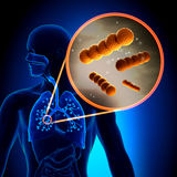 Streptocoque - bactéries grampositives sphériques Image stock