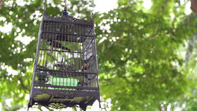 Streptopelia turtur in a cage on green trees background Stock Photo
