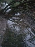Wishing Tree Reservoir Royalty Free Stock Photography