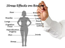 Stress Effects on Body. Presenting diagram of Stress Effects on Body stock photo