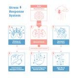 Stress response biological system vector illustration diagram,anatomical nerve impulses scheme.Clean outline graphic design poster. Stress response biological royalty free illustration