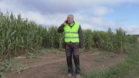 Stressful farmer talking on smart phone on the damaged cornfield stock video footage