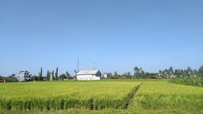 STRETCH OF RICE FIELD royalty free stock photos