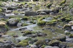 Stretch of river Stock Photography