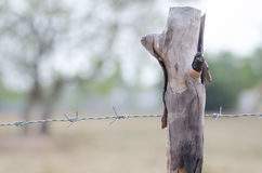 Stretched barbed fence with trees around the farm Saturday morni Stock Image