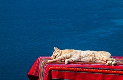 Cat nap with titikaka lake background. Stretched cat sleeping a nap on a table covered by a aguayo with lake titikaka background stock photo