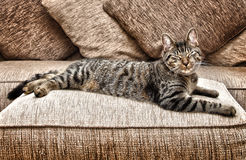 Stretched out cat. Stretched out tabby cat on couch Stock Photos