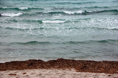 Stretches of sea and beach. Whether sea beach and cliff of Sardinia Royalty Free Stock Photo