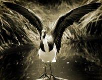 Stretching bird Royalty Free Stock Image