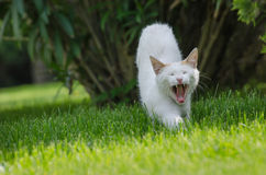 Stretching cat Royalty Free Stock Photography