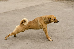 Stretching dog stock photos