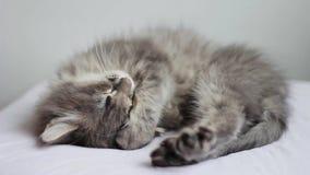 Stretching sleepy kitten stock footage