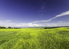 Stretching to the horizon field of flowers Royalty Free Stock Photography
