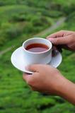 Stretta della mano un la tazza di tè Immagini Stock