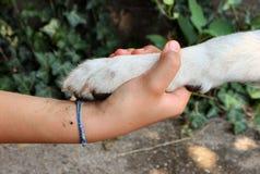 Stretta di mano con un cane Fotografia Stock