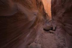 Stretti asciutti della forcella del coyote Gulch fotografia stock