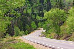Stretto, foresta entrante della strada di bobina Immagine Stock