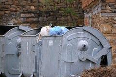 Streukatze auf dem Abfall-Behälter Lizenzfreie Stockbilder