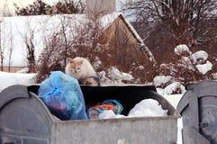 Streukatze auf dem Abfall-Behälter im Winter Lizenzfreie Stockbilder