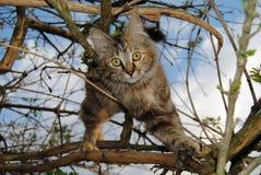 Streukatze, die in einem Baum spielt stockbild